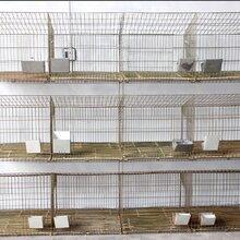 加粗镀锌兔笼家养饲养养殖兔笼塑料板地子母笼。图片