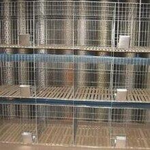 现货供应赖兔笼商品兔笼子母兔笼配件齐全图片
