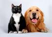 狗狗日常护理注意这三点,越来越健康!