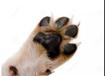 2019寵物加盟項目哪個好?俊寶俏寵物SPA護理