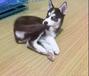 狗狗健康重在預防!俊寶俏寵物SPA