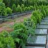 宝象山墓地