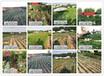 武汉植物园桃品种品种市场前景