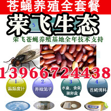 蒼蠅種蠅專業養殖蠅蛆無菌蠅蛆喂養魚蝦鱉青蛙黃鱔圖片
