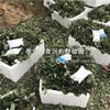 新品种越心草莓苗、新品种越心草莓苗出售