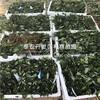 山东大棚草莓苗新品种、山东大棚草莓苗价格是多少