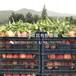 新品种金冠黄桃树苗、新品种金冠黄桃树苗多少钱
