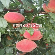 2018年黃金蜜4號桃樹苗報價圖片