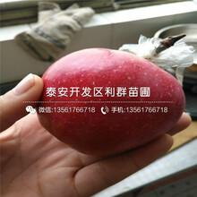 瑞士红肉苹果树苗行情报价图片