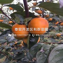 黃金蜜1號黃桃樹苗多少錢一棵、2019年黃金蜜1號黃桃樹苗多少錢圖片