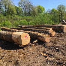 金威进口木材批发供应欧洲进口白蜡ABC白蜡木水曲柳原木可预订图片