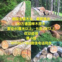 德国金威木业德国进口榉木原木实木可锯切板材木板家具板AB级ABC级图片