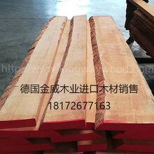 德国金威木业供应进口欧洲榉木木板实木毛边板家具板地板木材A级AB级ABC级图片