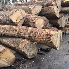 德国金威木业进口欧洲材白蜡木水曲柳实木白腊原木锯切板材AB级图片
