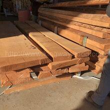 德國金威木業歐洲櫸木實木板毛邊板材櫸木板材山毛櫸木板FSC木料圖片