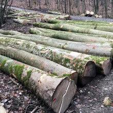 德国金威木业进口木材欧洲白蜡法国白蜡腊木白蜡木原木实木原材料图片