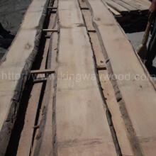 金威木業進口木材歐洲櫸木山毛櫸實木板材毛邊木板櫸木圖片