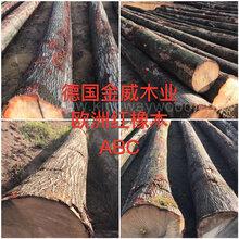 德国金威木业欧洲材欧洲红橡橡木红橡木原木实木进口木材原材料批发图片