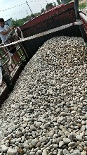 邢台清河县鹅卵石/河滩石/水冲石产地批发图片