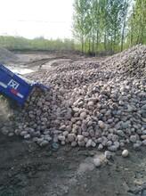 新乡牧野区鹅卵石/河卵石/海浪石供应图片