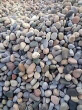 济南平阴县鹅卵石景观石河岸石水冲石溪坑石大卵石海浪石开采基地图片