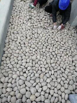 固原鹅卵石固原人工水系铺设鹅卵石生产供应商