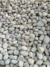 潍坊寿光鹅卵石潍坊寿光水处理鹅卵石矿农直销图片