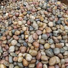 长治鹅卵石长治鹅卵石虑料粒径规格质量标准图片