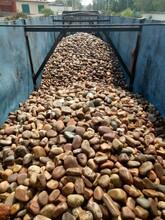泉州專用鵝卵石濾料質量標準圖片