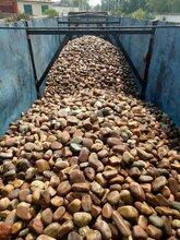 亳州天然鹅卵石变电所鹅卵石生产销售