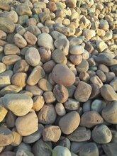 阜阳颍东区鹅卵石污水处理鹅卵石滤料变电站用垫底鹅卵石产地直销图片