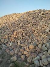 蚌埠鹅卵石变电站鹅卵石大型鹅卵石草坪点缀多少钱一吨图片