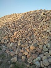 清远天然鹅卵石人工水系铺设鹅卵石多少钱一吨