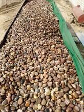 黃山黃山區鵝卵石天然鵝卵石凈水處理鵝卵石墊層廠家批發圖片