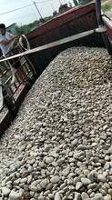 吳忠青銅峽鵝卵石變電站用墊底鵝卵石化工廠鵝卵石產地直銷圖片