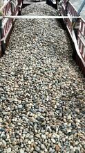 池州鹅卵石变电站用垫底鹅卵石变电所鹅卵石出厂价格图片