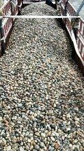 萍乡鹅卵石5-8cm天然鹅卵石生产供应商