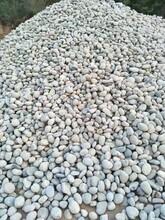 六安鹅卵石园林绿化鹅卵石园林绿化鹅卵石生产供应商图片