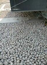咨詢澧縣專用圓又圓鵝卵石濾料變壓站鵝卵石產地直銷圖片