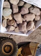安庆太湖县鹅卵石净水处理鹅卵石垫层大型鹅卵石草坪点缀批发图片