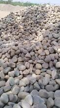 焦作孟州鵝卵石污水處理鵝卵石濾料凈水處理鵝卵石墊層批發圖片