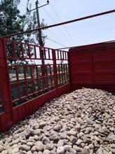 邢臺墊層系列鵝卵石濾料生產供應商圖片