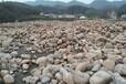 莆田商洛河卵石河滩石人工湖铺设鹅卵石供应价格