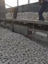 江门鹅卵石天然鹅卵石厂家招商图片