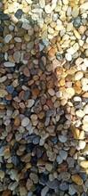 禹会天然鹅卵石大型鹅卵石草坪点缀指定供应商图片