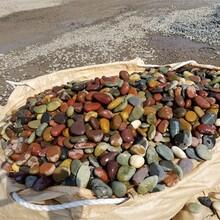 歙县天然鹅卵石园林绿化鹅卵石联系电话图片