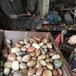 东莞天然鹅卵石鹅卵石虑料粒径规格诚招厂家专卖店