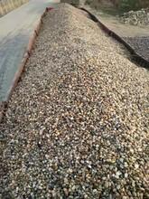 天长鹅卵石5-8cm鹅卵石虑料承托层来电咨询图片