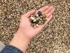 湖南鹅卵石5-8cm鹅卵石虑料粒径规格供应商