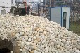 渦陽縣鵝卵石濾料污水處理鵝卵石濾料供應價格